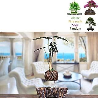 Garden Levitating Air Bonsai Pot Rotation Planters Magnetic Levitation Suspension Flower Floating Pot Potted Plant for Desk Decor