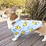Hundebekleidung Herbst und Winter Teddy Haustier Kleidung Frühling und Herbst Zwergspitz, kleine...