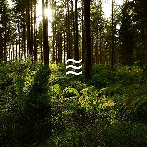 Calmful Relaxing Foresty Noises for Home Rest
