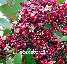sandalwood seeds germination