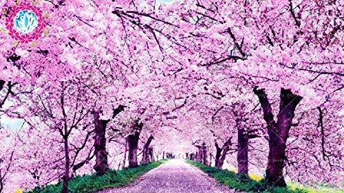 graines rares sakura japonais graines de fleurs de cerisier plantes Bonsai pour 20pcs maison et jardin/sac Oriental doux Prunus Graines de fleurs