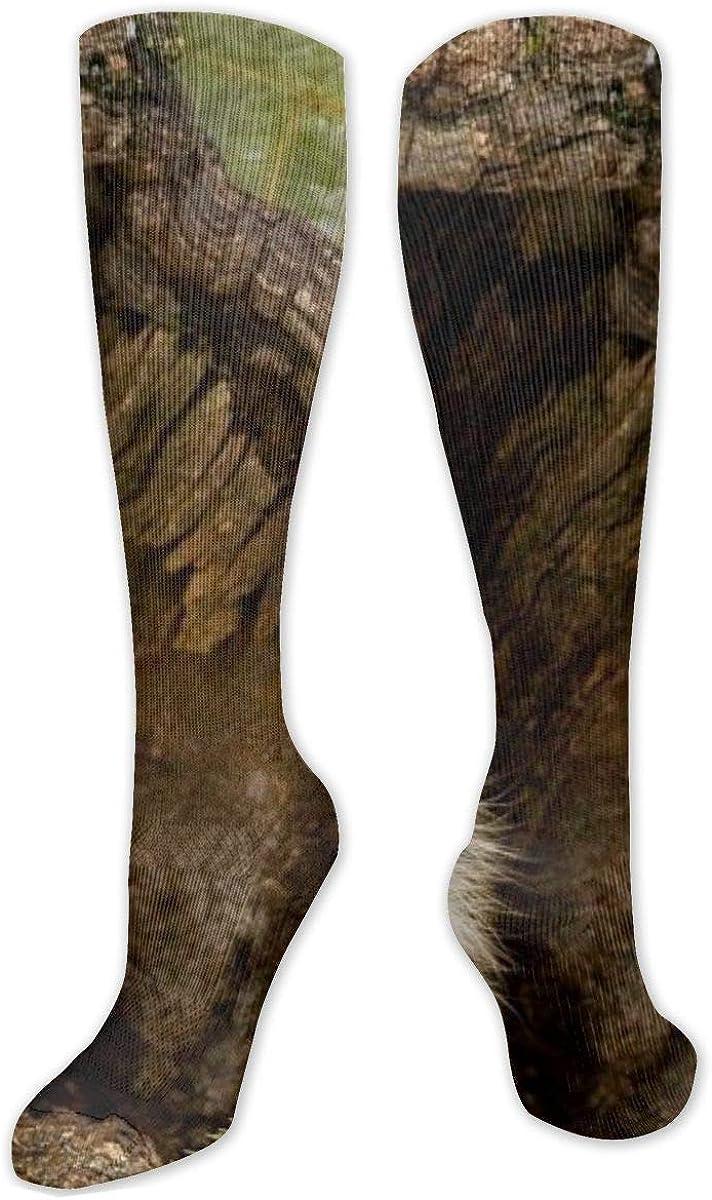 Raccoon Hd Wallpapers Knee High Socks Leg Warmer Dresses Long Boot Stockings For Womens Cosplay Daily Wear