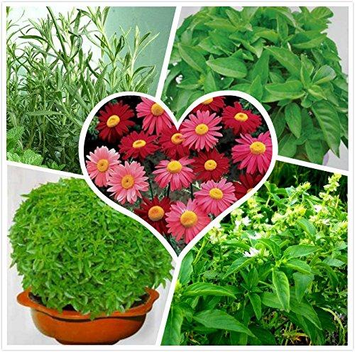20 graines / paquet Quatre saisons fleurs graines balcon intérieur graines lecteur de moustiques