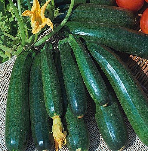 Courgettes - Zucchini - 20 Graines