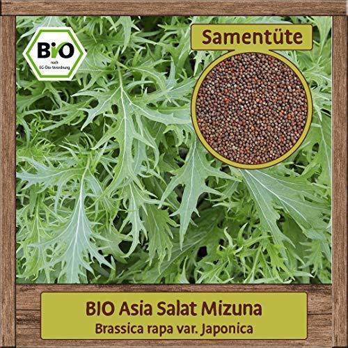 BIO Asia Salat Samen Mizuna Pflücksalat Asiasalat (Brassica rapa) Gemüsesamen ganzjährig & winterhart