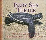 Baby Sea Turtle (Nature Babies)