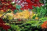 VLIES Fototapete-JAPANESE GARDEN-400x260 cm-8 Bahnen-(21017)-Inkl. Kleister-EASYINSTALL-PREMIUM-Bäume Garten Birken-Wald Blüten Orchideen Garten Blumen Steine Strand Meer Berg-See Skyline...