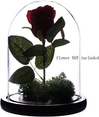 "Artlass Glass Cloche Bell Jar Display Dome with Black Wooden Base Dia 6"" x H 10"""