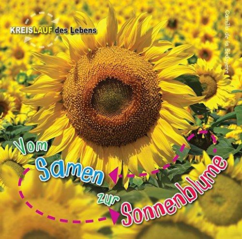 Vom Samen zur Sonnenblume: Kreislauf des Lebens