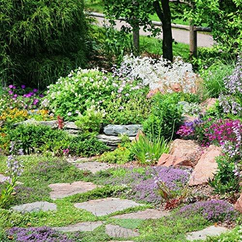 Steingartenpflanzen gemischt Samen -