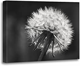 TORASS Canvas Wall Art Print Flowers Dandelion Nature Black White Photography Artwork for Home Decor 12