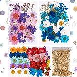 101PCS Fiori secchi veri pressati Fiori secchi naturali Fiori multicolori secchi per unghie per resina, Scrapbooking, Candela fai da te, Creazione di artigianato con ciondolo di gioielli (4packs)