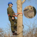 Trepar a los árboles artefacto crampones escalada de acero se deslizan árbol resistente Forstzubehouml ;, for la caza de monitoreo, recolección de frutas, coco for la protección contra caídas, arboris