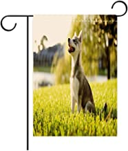 BEICIHOME Double Sided Flag Garden Flag Holiday Decoration Alaskan Malamute Klee Kai Puppy Sitting on Grass Looking Up Friendly Young Cute Animal Outdoor Party Yard Flags, Decorative House Yard Flag