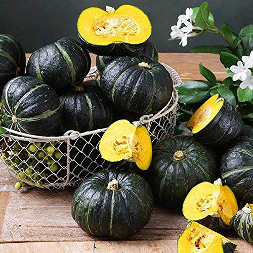 Generic Generische japanische Kürbiskerne Garten essbare Früchte Gemüse Plants-10Pcs / Pack