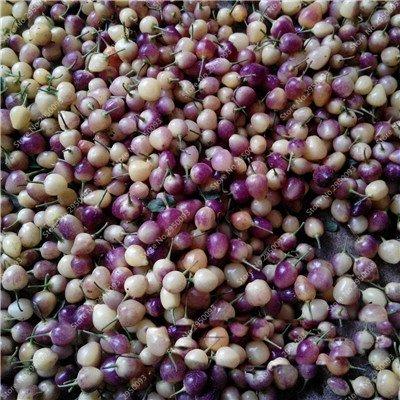 150pcs/sac exotique cerise poivre semences importées Balcon délicieux Chili Chili Bonsai Jardin potager des plantes ornementales pour la fleur 3