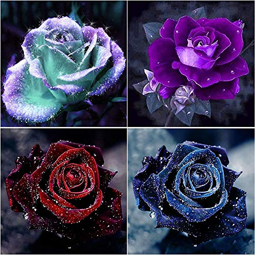 4 Pack 5D DIY Diamond Painting by Numbers Diamond Art Kits,Roses Full Drill for Adults Kids Gifts for Home Wall Decor,Beautiful Rose Flower 11.8×11.8in