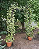 Titan Arch, Large Lightweight Metal Backyard Garden Arch for Climbing Plants