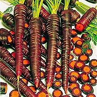 Creine 100 piezas de semillas de zanahoria mezcladas Semillas de hortalizas de jardín