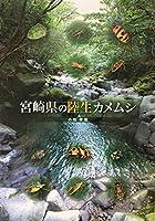 宮崎県の陸生カメムシ