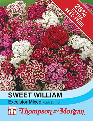Thompson /& MORGAN-FIORI-Sweet William EXCELSIOR Misto 300 semi