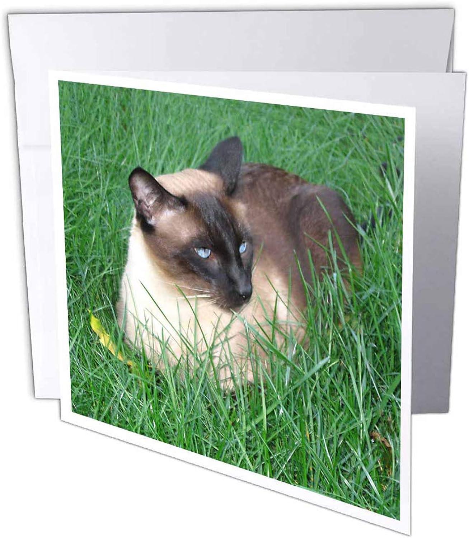 3dRosa gc_4496_1 gc_4496_1 gc_4496_1 Grußkarte Siamesische Katze , 15,2 x 15,2 cm, 6 Stück B07BB1NM1Y   Günstige Bestellung  fdf02a