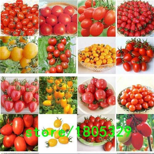 Bloom Green Co. 100PCS 24 Arten Tomatensamen Mixed-Pack Lila Schwarz Rot Gelb Grün Kirsche Pfirsich Birne Tomaten-Samen Bio-Lebensmittel Grade: mix