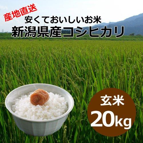 【自宅用】[玄米]安くておいしいお米 新潟県産コシヒカリ[20キロ]