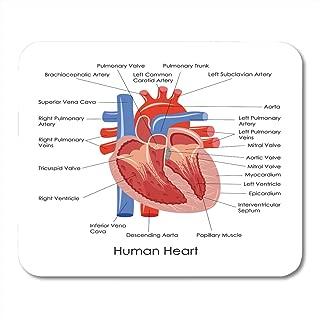 Emvency Mouse Pads Anatomical of Diagram Human Heart Anatomy Body Cardiac Muscle Organ Mousepad 9.5