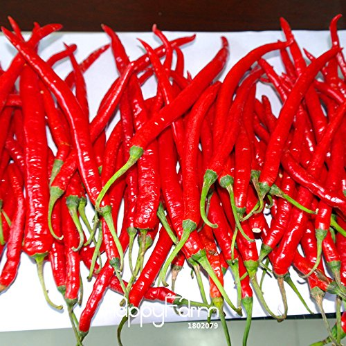 Hot Sale! 100 graines / semences Lot long Piment rouge sain organiques Semences Potagères, Jardin des plantes en pot Peppers, # ZZT8K0