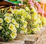 Petunia'Cascade' - giallo - 160 semi