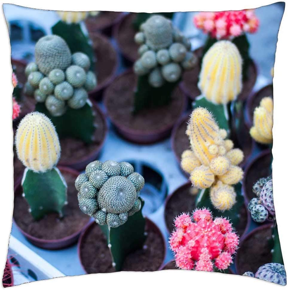 LESGAULEST Max 44% OFF Throw Pillow Cover 24x24 Flowering Pla inch - Fashion Cacti