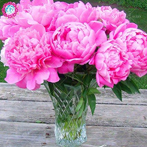 11.11 Big Promotion! 20 pcs/lot graines rares pivoines colorées graines de Bonsaï chinois jardin et la maison plante herbe organique 2