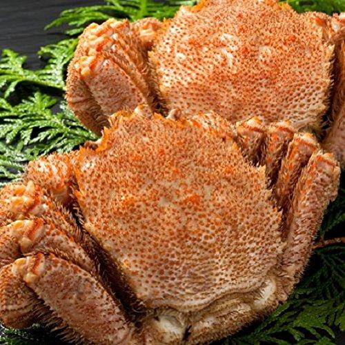 どさんこグルメマーケット 毛ガニ 特大 1.6kg (約800g×2尾) 北海道産 タグ付 ギフト 浜茹で ボイル 冷凍 解凍のみでOK カニ味噌 良品 選別 厳選 堅蟹 毛蟹