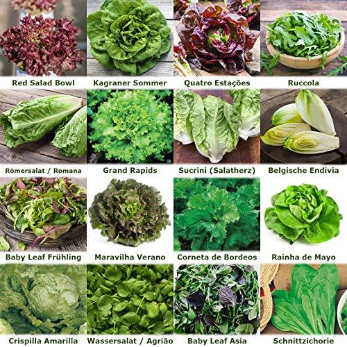 verschiedene Salate Saat 16 x 100 Saatgut Salat Mix 100% Natursamen handverlesen aus Portugal, seltene und alte Sorten, Samen mit hoher Keimrate, Salatsamen für Garten, Balkon, Terrasse, Gewächshaus