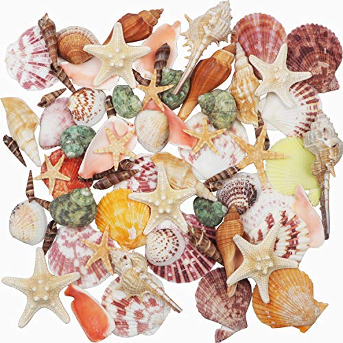 Sea Shells Mixed Beach Seashells 9 Kinds 3-9 CMNatural Seashells and 2 Kinds Starfish for Beach Theme Party Wedding Decorations DIY Crafts Home Decorations FishTank Supplies