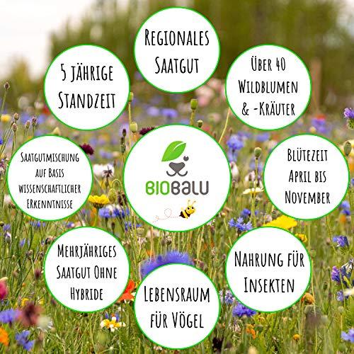 Bienenweide Saatgut - 3