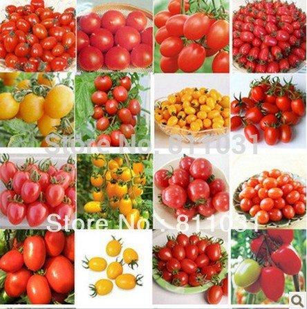300pcs (10 pack) TOMATE GRAINES (MIX) Livraison Violet Noir Rouge Jaune Vert Cerise Pêche Poire Tomate non-OGM aliments biologiques GRATUIT