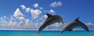 JP London MD3A045 Diving Dolphin Paradise Panoramic Fully Removable Prepasted Wall Mural at 4-Feet High by 10.5-Feet Wide