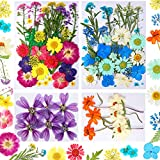 77 Pieces Real Dried Pressed Flowers Leaves Natural Pressed Flowers Colorful Pressed Flowers Real Dry Flowers for DIY Candle Resin Jewelry Nail Pendant Crafts Making Decorations