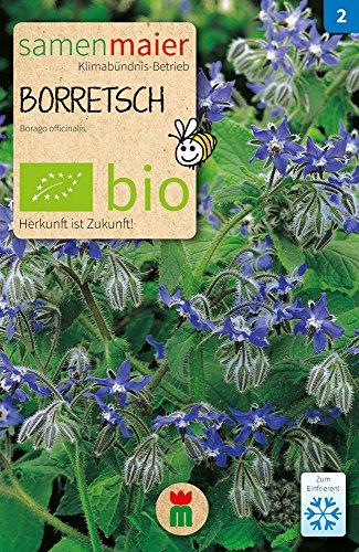 Samen Maier 830 Borretsch (Bio-Lauchsamen)