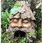 Animal Crackers Frog Toad House Face in Tree Stump design weatherproof garden or pond decoration