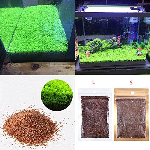 Semi per piante da acquario, tappeto erboso acquatico a doppia foglia, per acquario, rocce, prato, decorazione da giardino (doppia foglia grande)