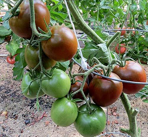 Tomate Schwarzer Prinz - 10 Samen