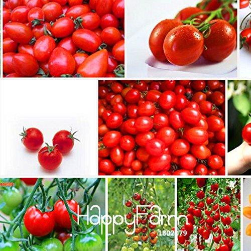 Perte de promotion! Cerise graines de tomates, tomates rouges tomates cerises, légumes paquet de graines de fruits d'origine, 30 semences / Lot, # 85EYCP