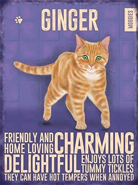 Metal Sign 8x12 Inches Ginger Cat Iron Painting Retro Metal Plaque Warning Sign Vintage Tin Art Wall Decor For Store Yard Bar Coffee House 8x12 Inches