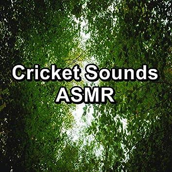 Cricket Sounds ASMR