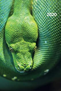 2020: Emerald tree boa Chic Planner Calendar Organizer Daily Weekly Monthly Student for researching captive bred snakes for sale