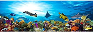 Great Barrier Reef Colorful Coral with Fish Sea Turtle Photo Photograph Cool Wall Decor Art Print Poster 36x24