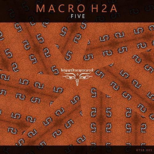 Macro H2A